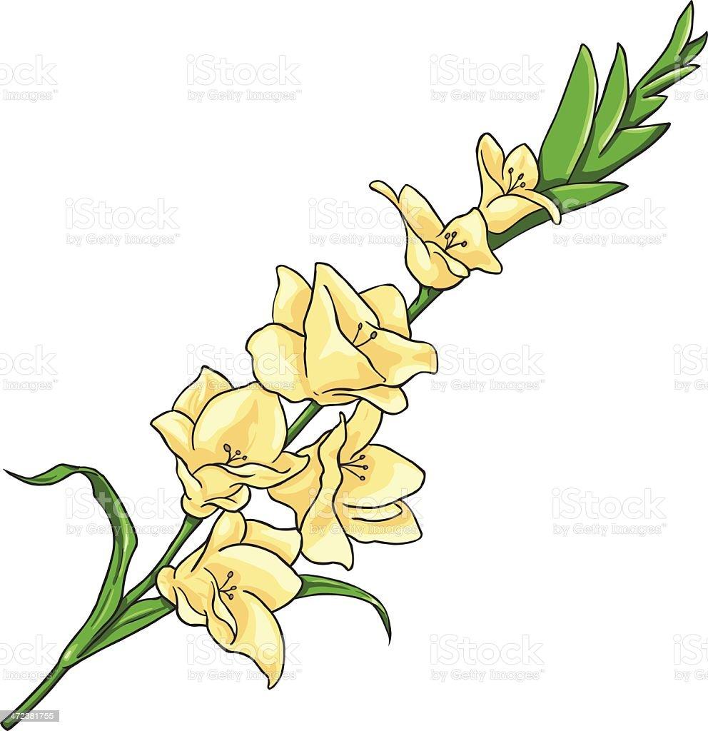 Vector Cartoon Isolated Illustration - Yellow Gladiuolus vector art illustration