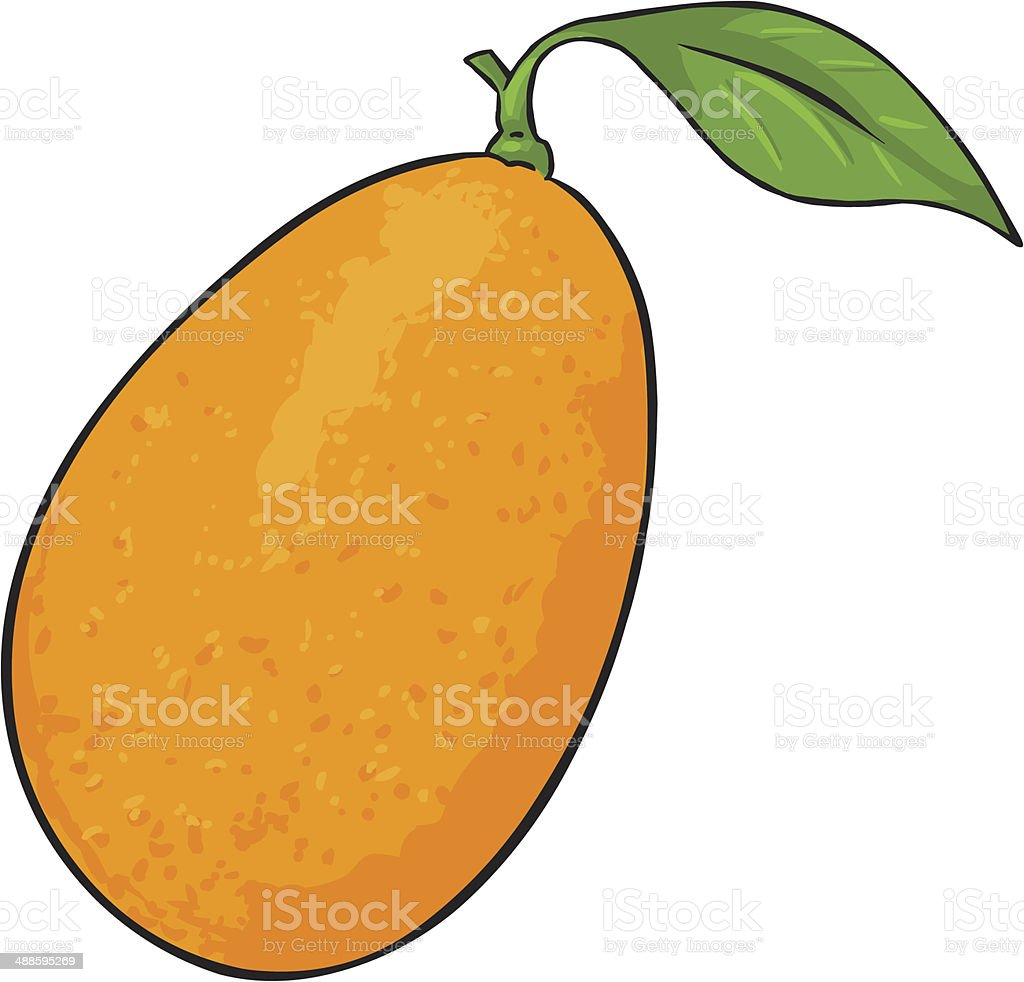 Vector Cartoon Kumquat vector art illustration