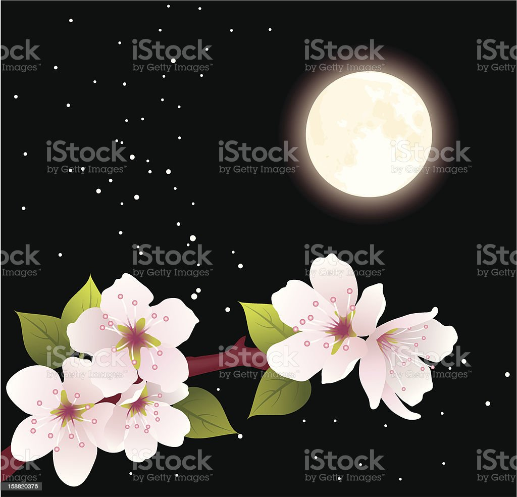 vector cherry branch and moon royalty-free stock vector art