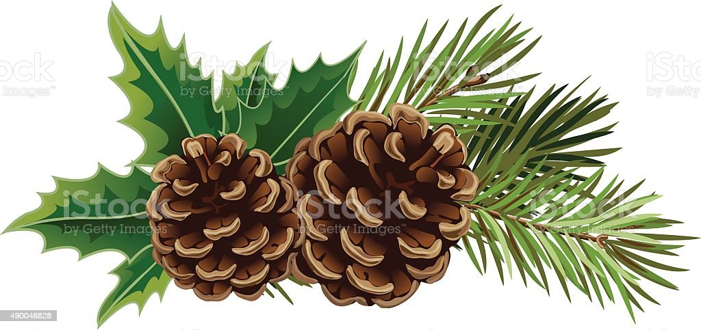 Vector Christmas tree branch with pine cones and mistletoe vector art illustration