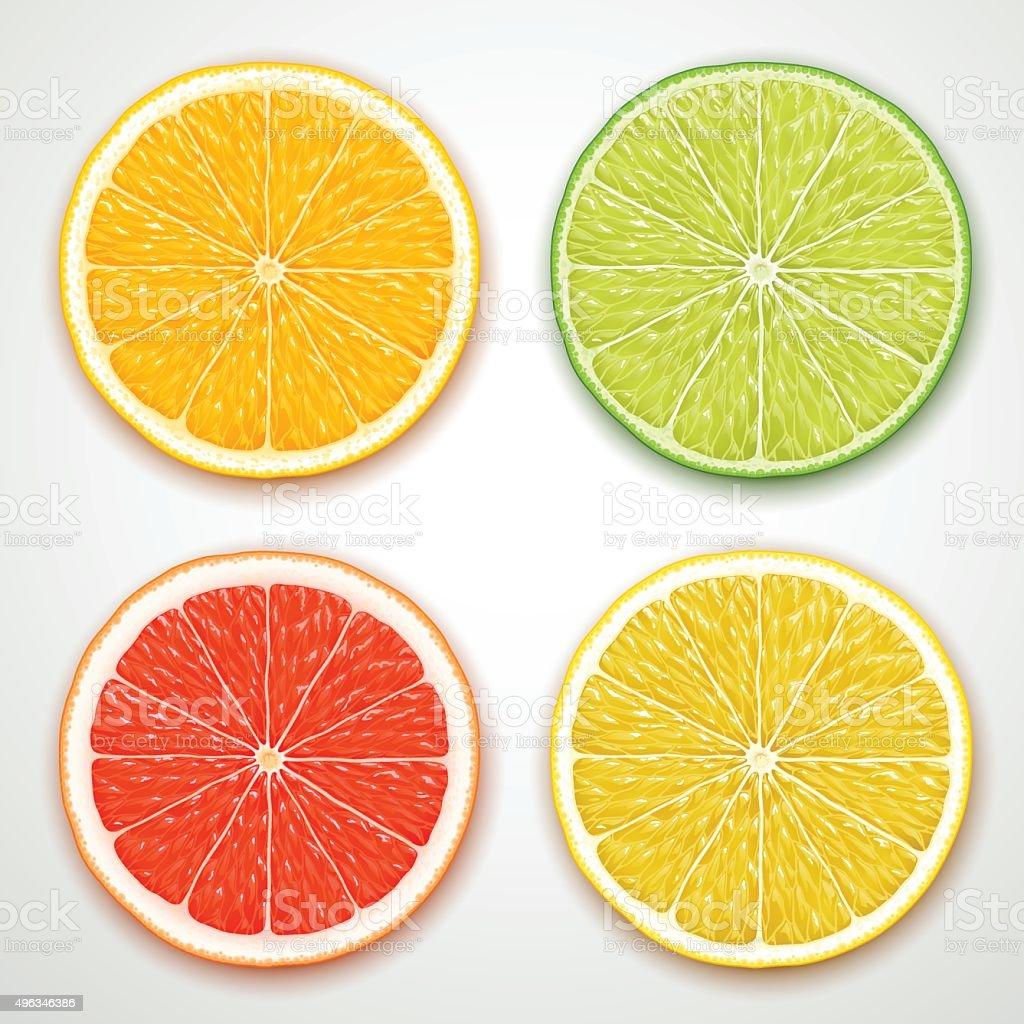 vector citrus slices vector art illustration