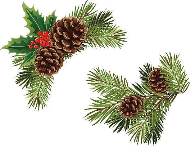 christmas pine cone drawing - photo #27