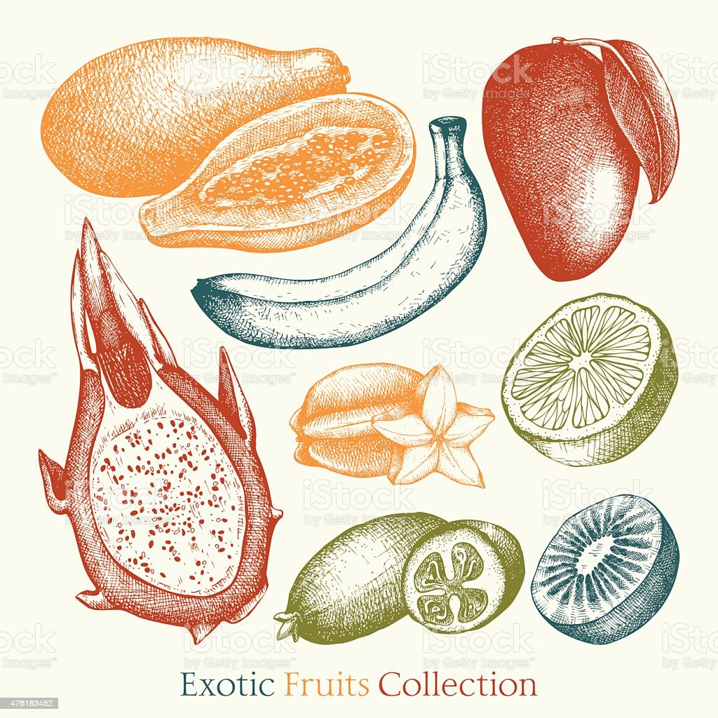 Vector collection of ink hand drawn exotic fruits sketch vector art illustration