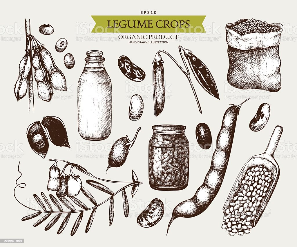 Vector collection of ink hand drawn legume crops sketches. vector art illustration