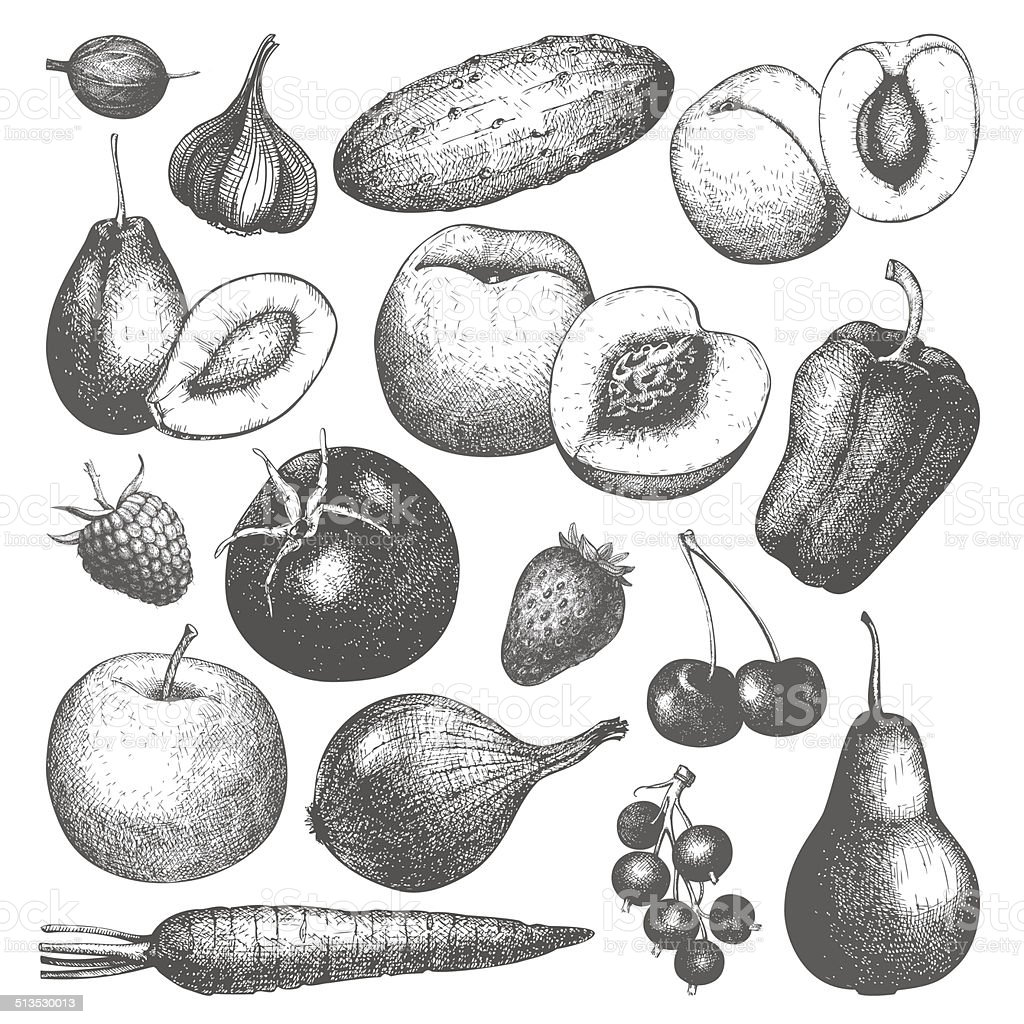 Vector collection of ink hand drawn vegetables, fruits and berries vector art illustration