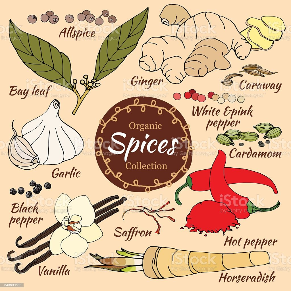 Vector collection of spice for food and cosmetic. vector art illustration