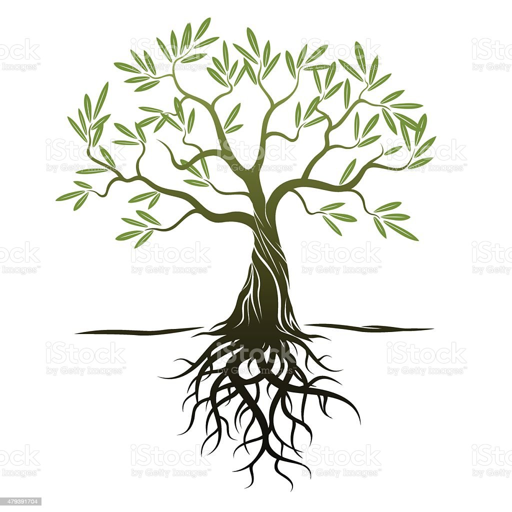 Vector Color Olive Tree with green Leafs and Roots. vector art illustration