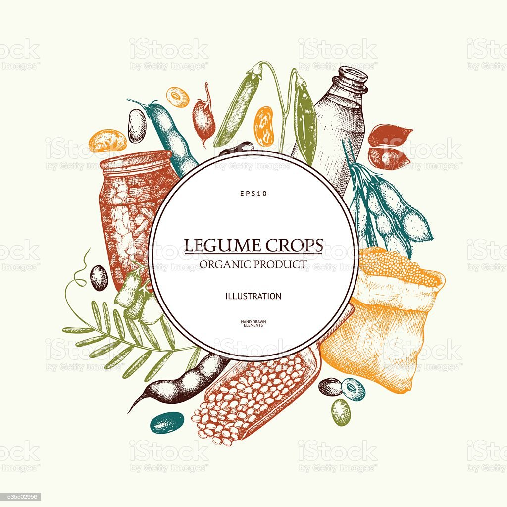 Vector colorful design with ink hand drawn legume crops sketches. vector art illustration