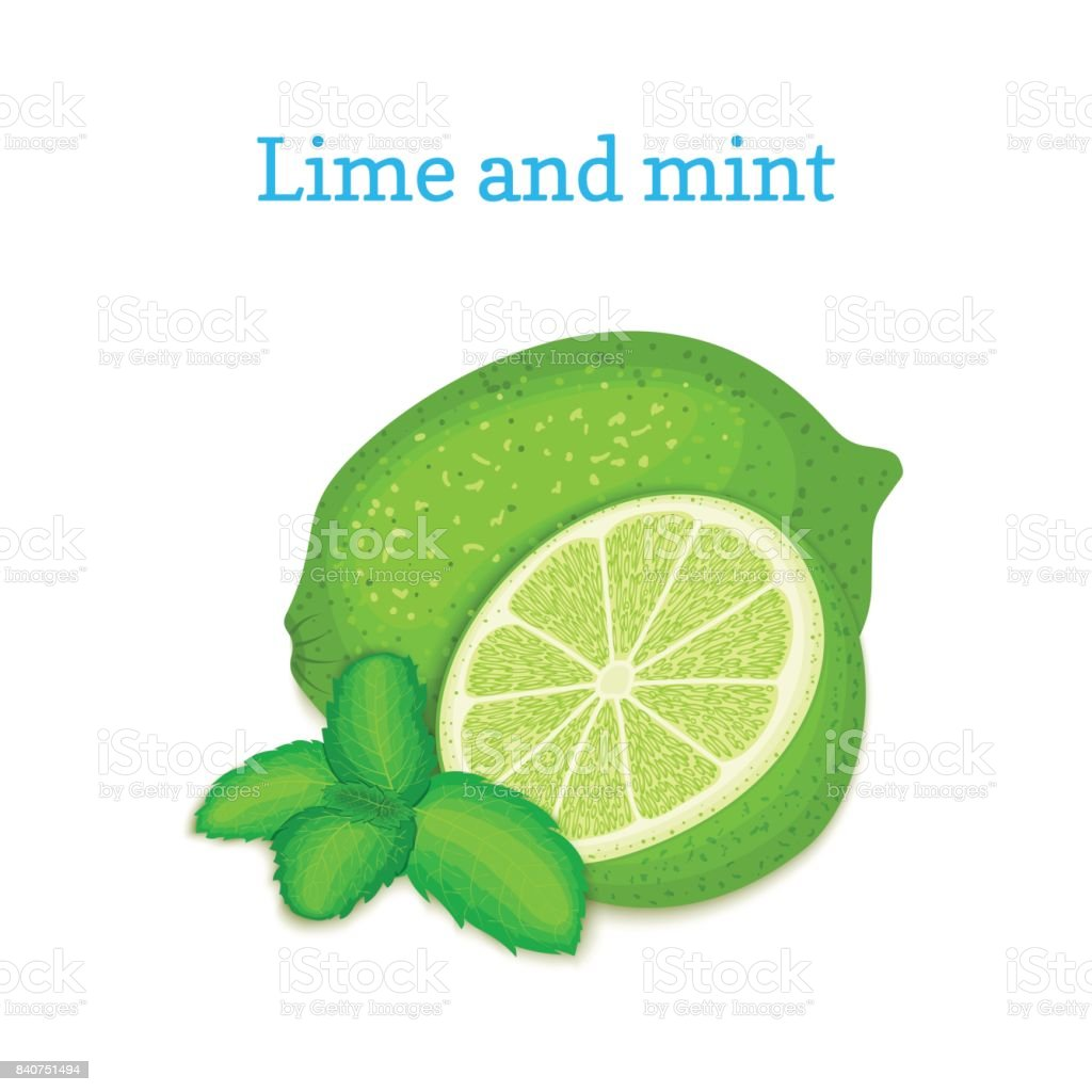 Vector composition of a citrus lime fruit and mint leaves. Green limes whole and cut. Group of tasty ripe tropical fruits for design for the packaging of juice, breakfast, healthy food, vegetarianism. vector art illustration