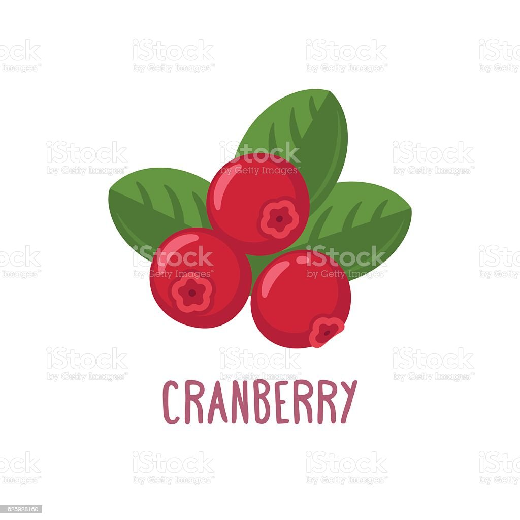 Vector cranberry icon vector art illustration