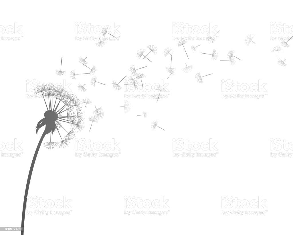 Vector Dandelion vector art illustration