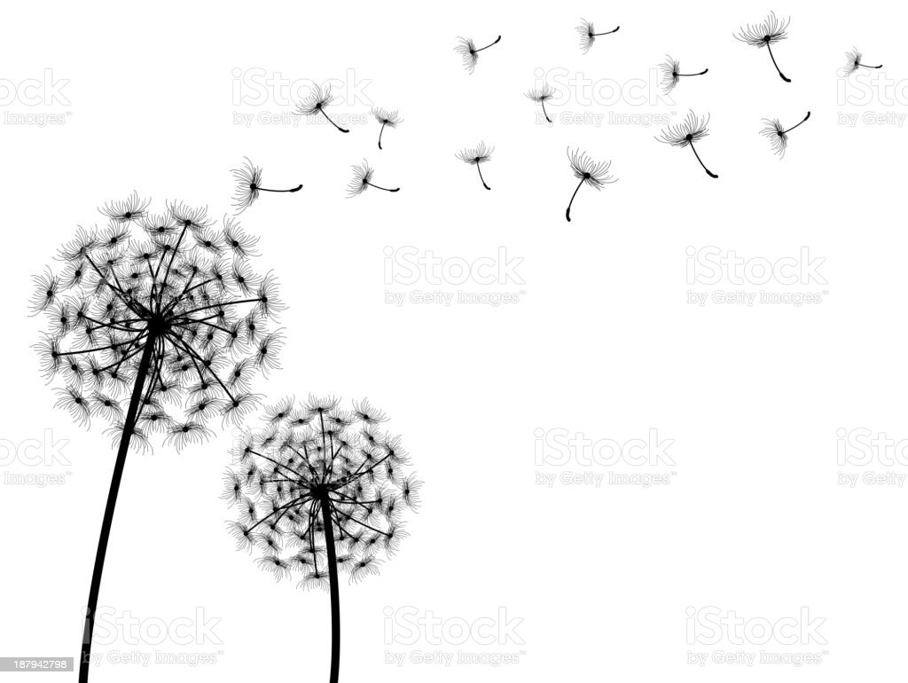 vector dandelion with white background royalty-free stock vector art