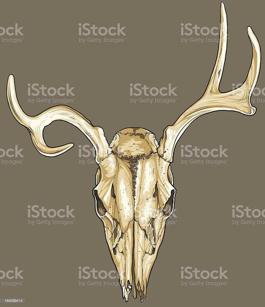 Vector Deer Skull royalty-free stock vector art
