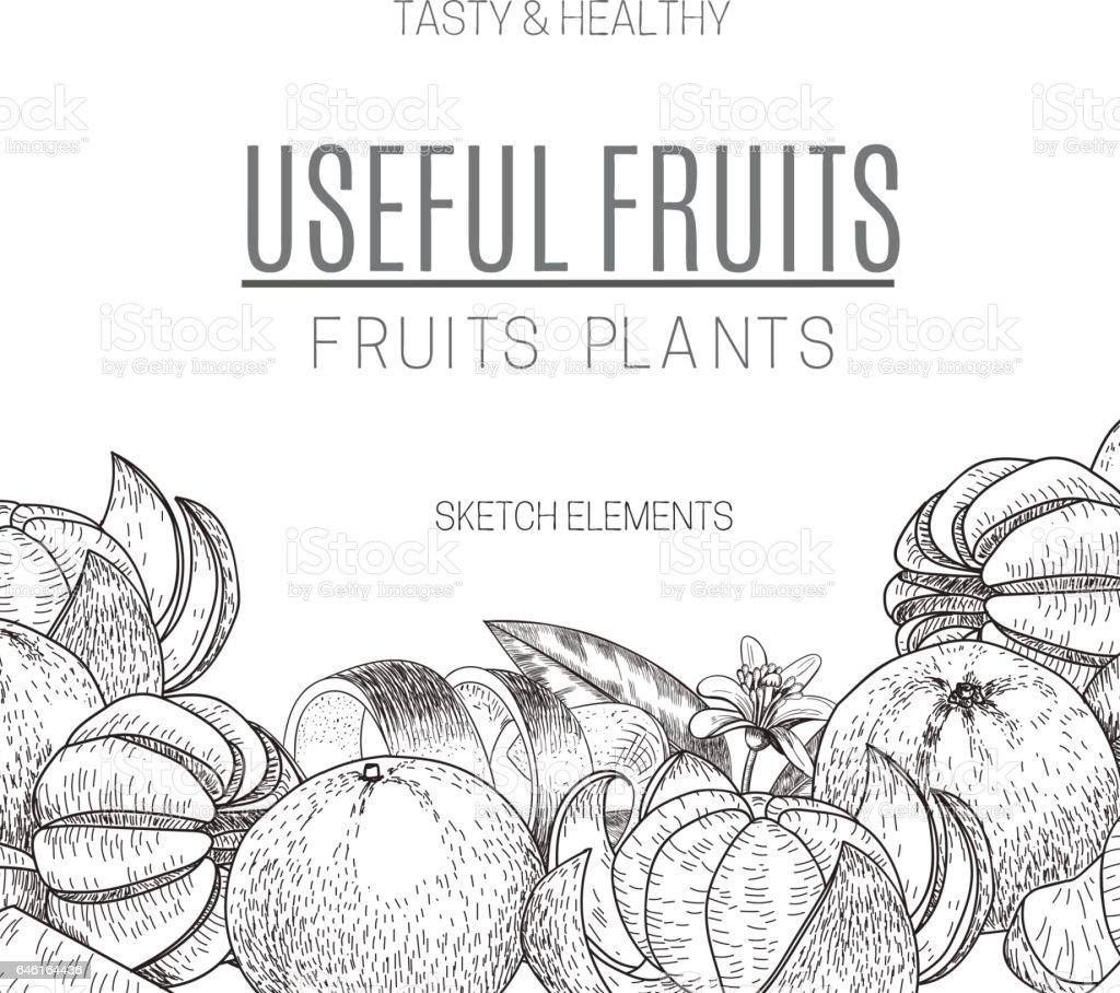 Vector design of hand drawn mandarins. Vintage sketch style illustration. Organic eco food. Whole , sliced pieces half,leaves and flowers leave . Fruit engraved vector art illustration