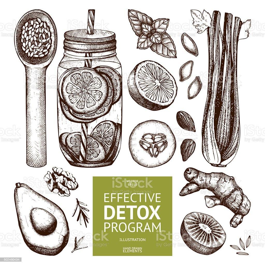 Vector design with hand drawn detox illustration. vector art illustration