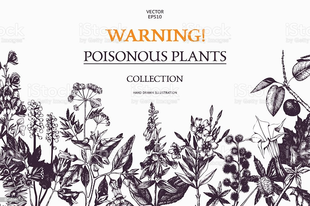 Vector design with hand drawn poisonous plants. vector art illustration