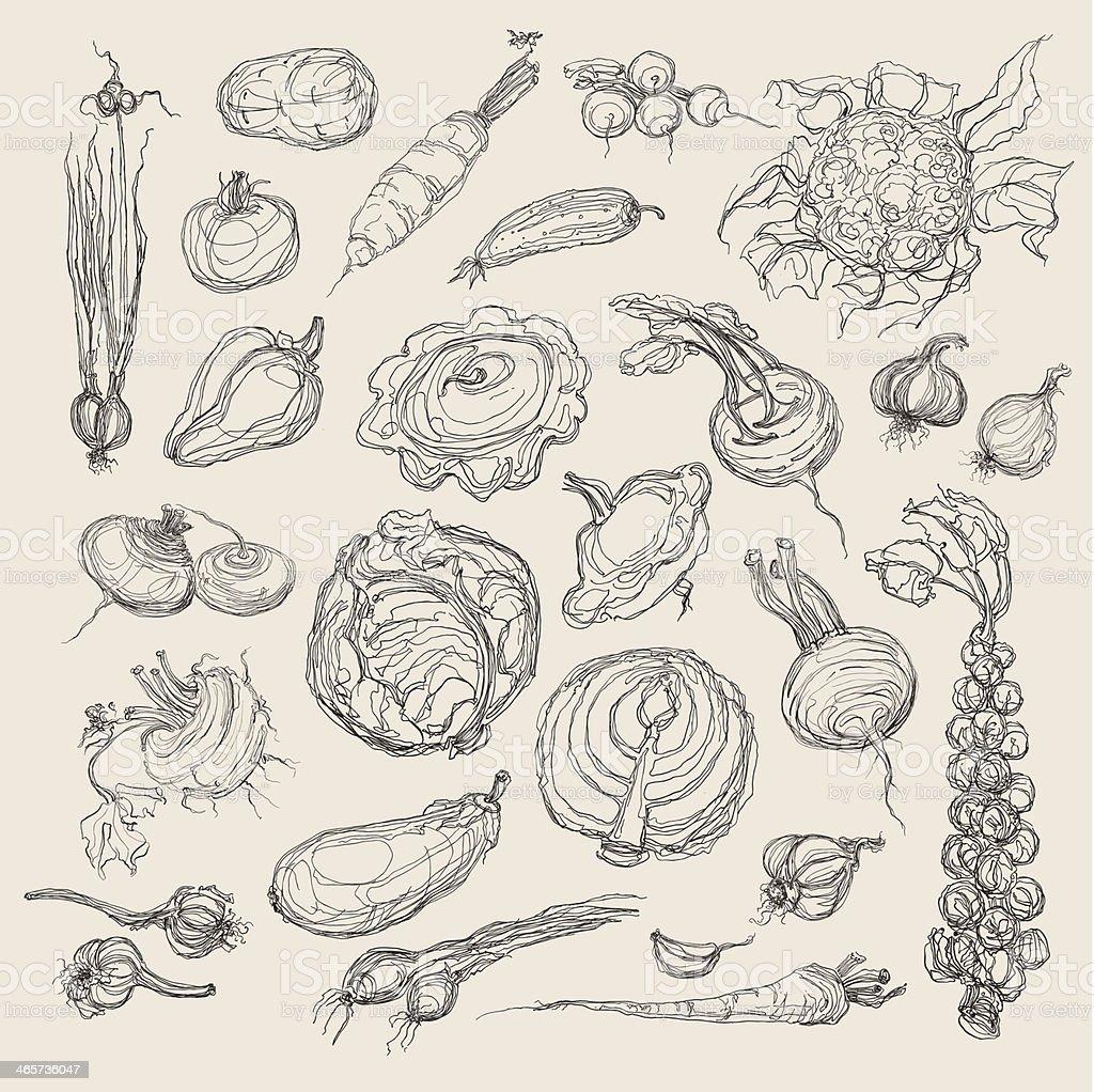 Vector diagram of vegetables in black vector art illustration
