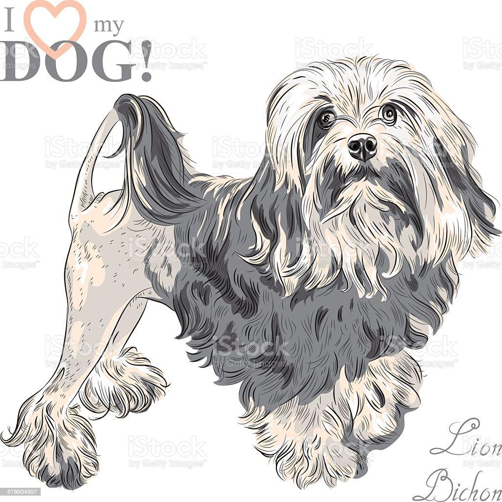 vector dog breed Lowchen vector art illustration