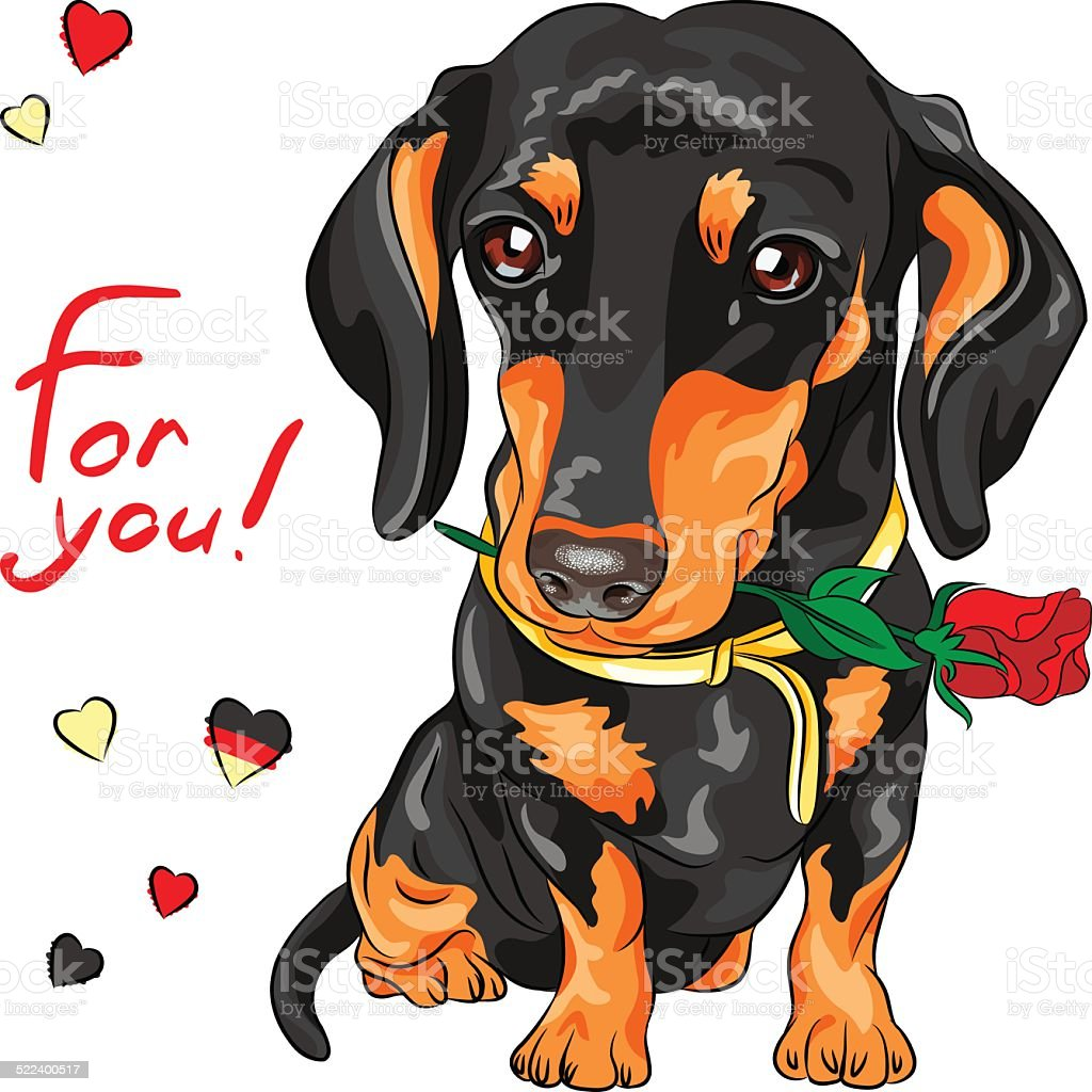 vector dog dachshund with red flower vector art illustration
