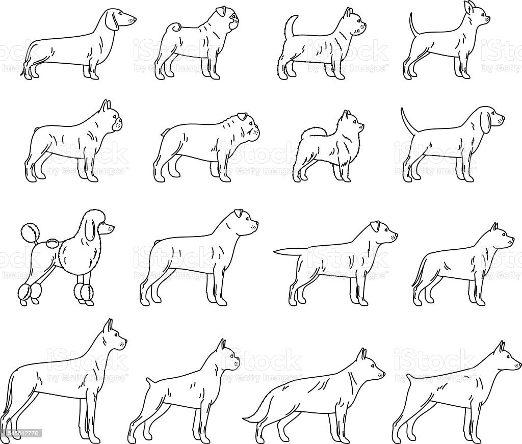 Vector dog thin line icons collection isolated on white vector art illustration