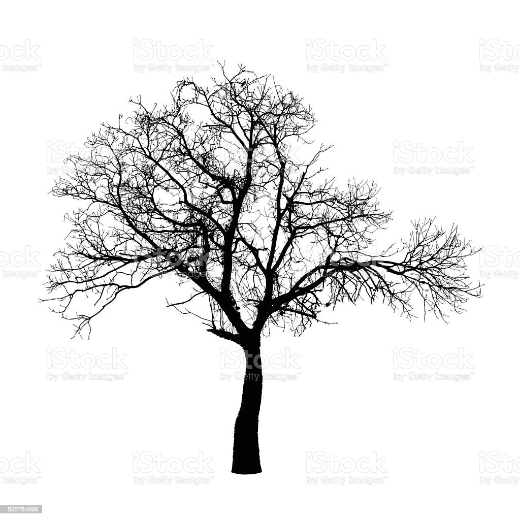 Vector drawing of the winter tree vector art illustration