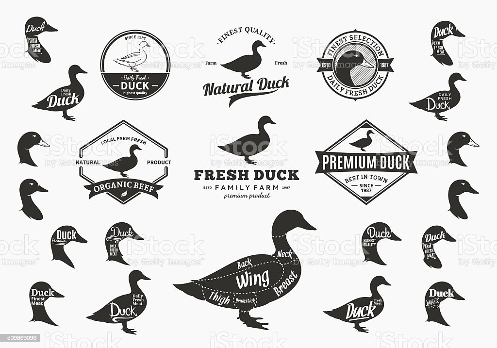 Vector Duck Labels, Icons, Charts and Design Elements vector art illustration