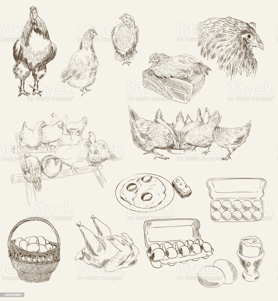 vector egg chicken breeding set vector art illustration
