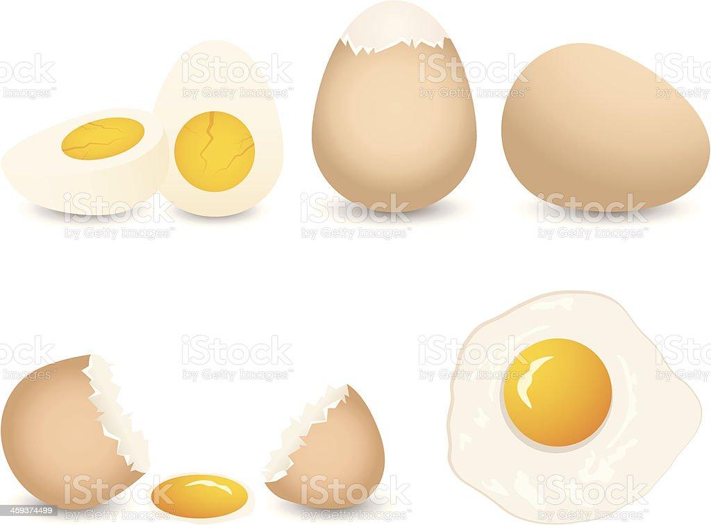 vector  egg collection vector art illustration
