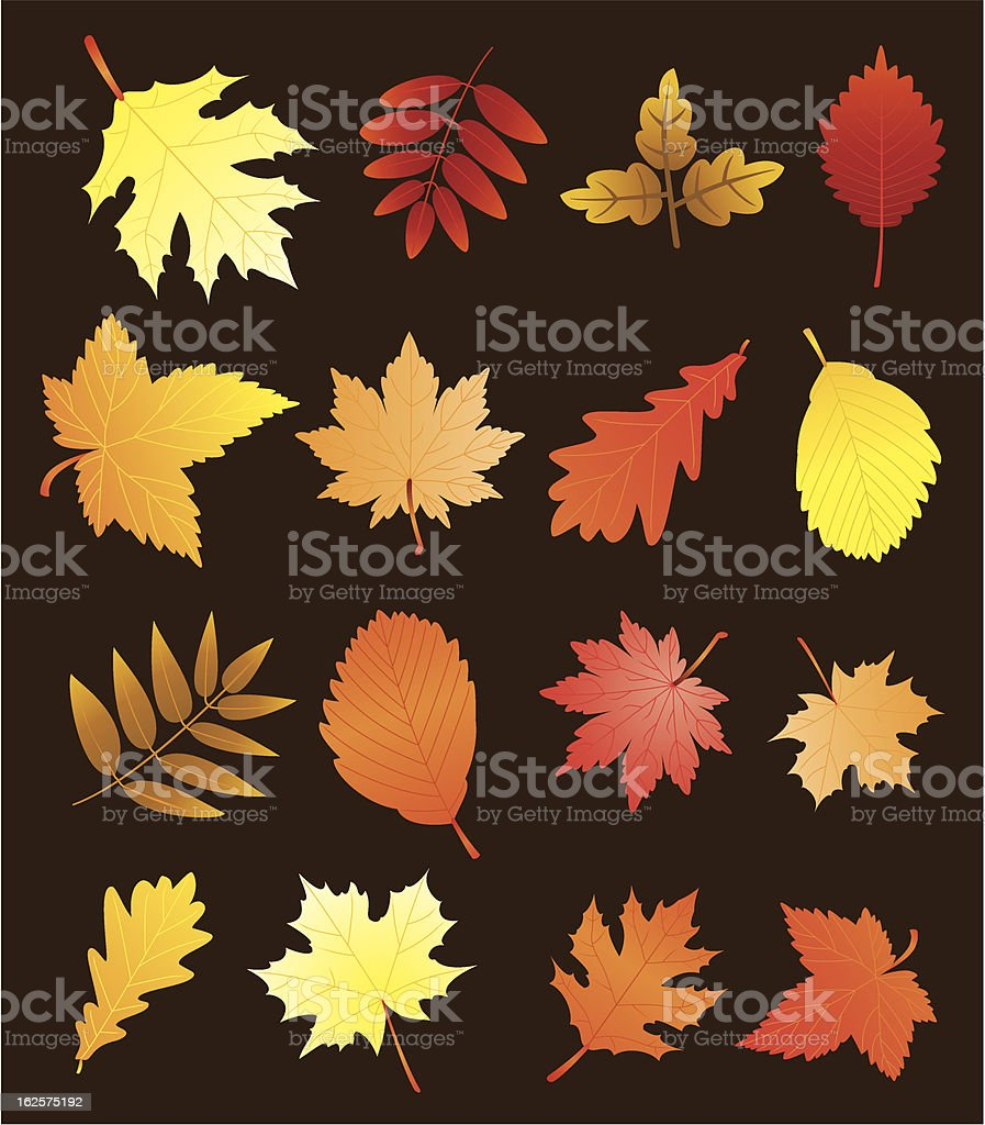 vector fall leaves royalty-free stock vector art