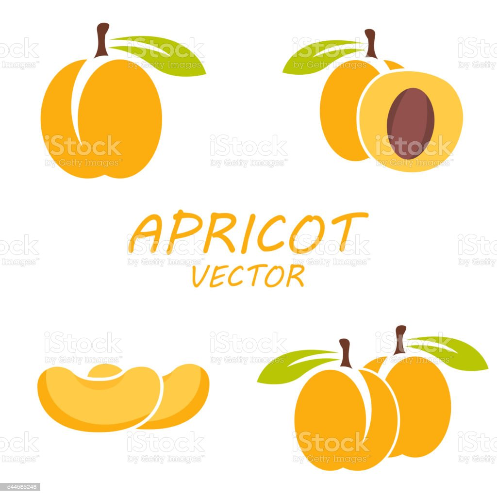 Vector flat apricot icons set vector art illustration