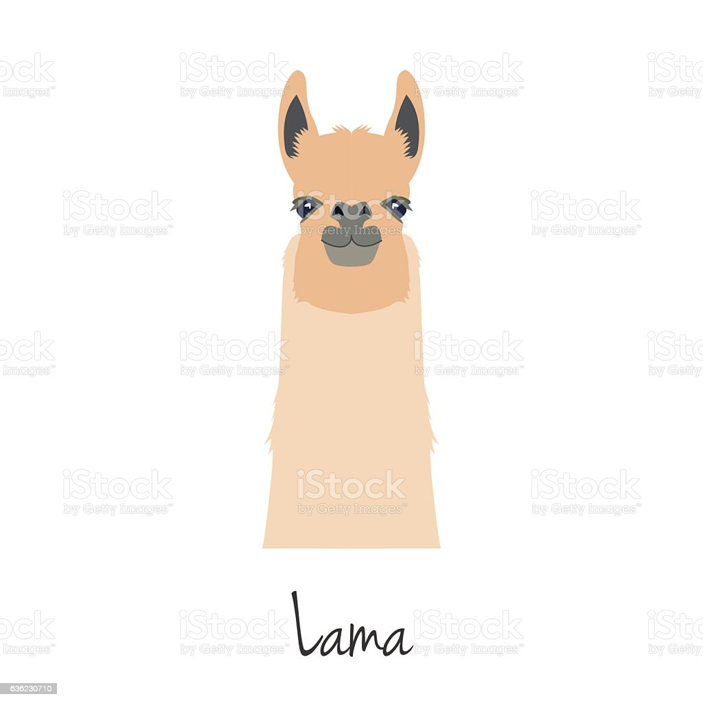 Vector flat, cartoon style lama head isolated vector art illustration