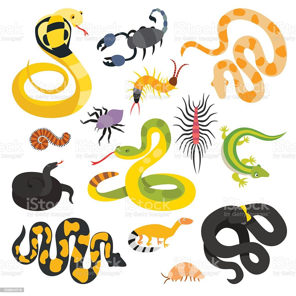 Vector flat snakes and other danger animals collection isolated on vector art illustration