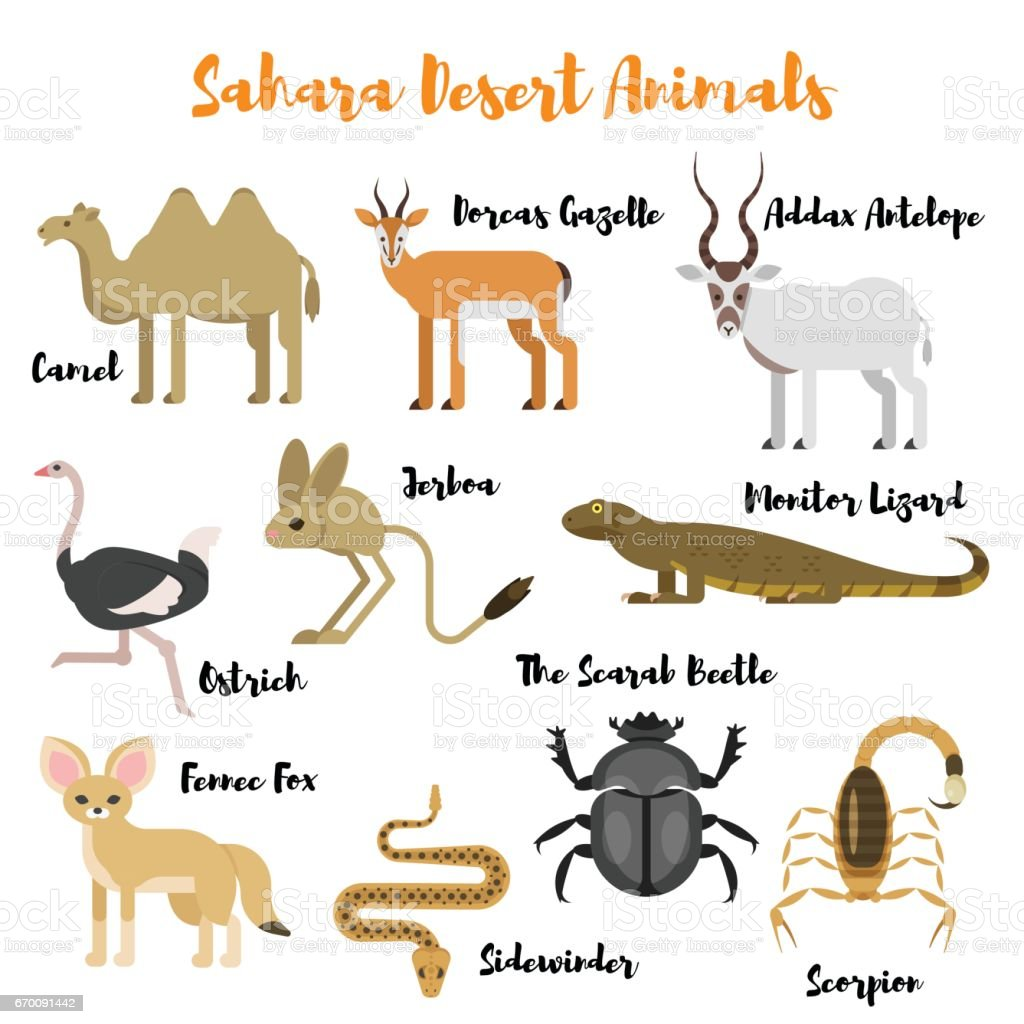 Vector flat style set of desert wild animals. vector art illustration