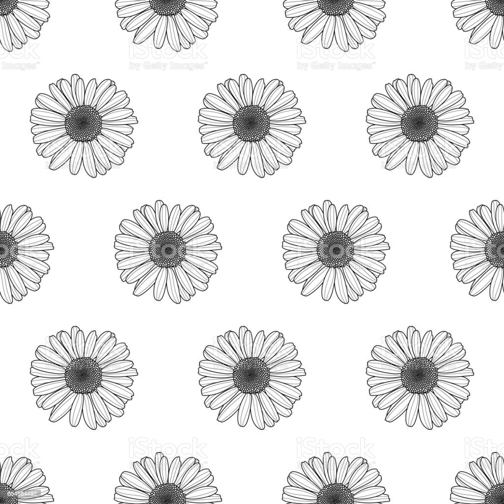 Vector floral seamless pattern. Black and white background with outline hand drawn chamomile flowers. vector art illustration