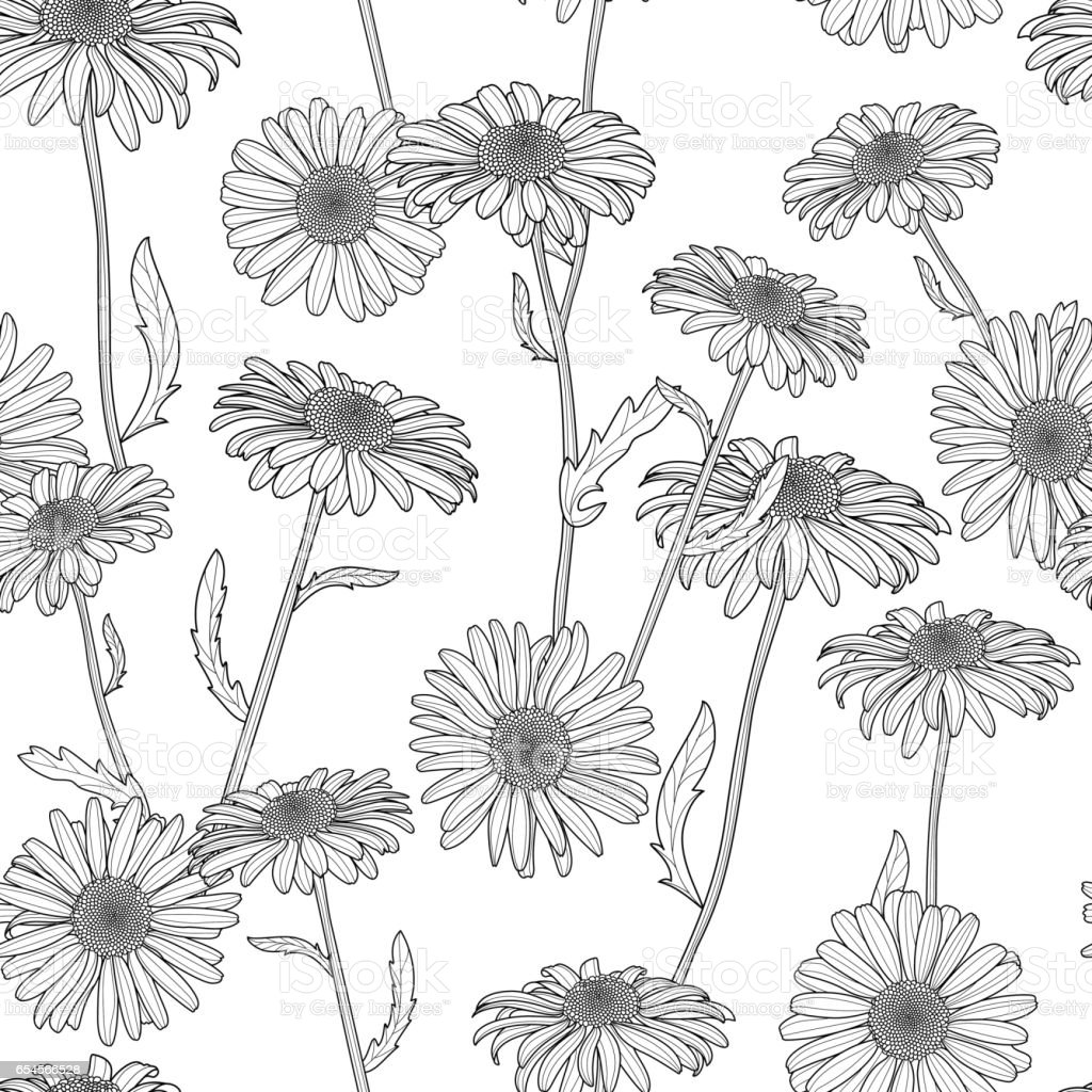 Vector floral seamless pattern. Black and white background with hand drawn sketched chamomile flowers. vector art illustration