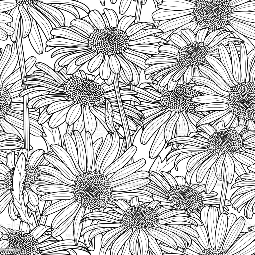 Vector floral seamless pattern. Monochrome background with hand drawn outline chamomile flowers. vector art illustration