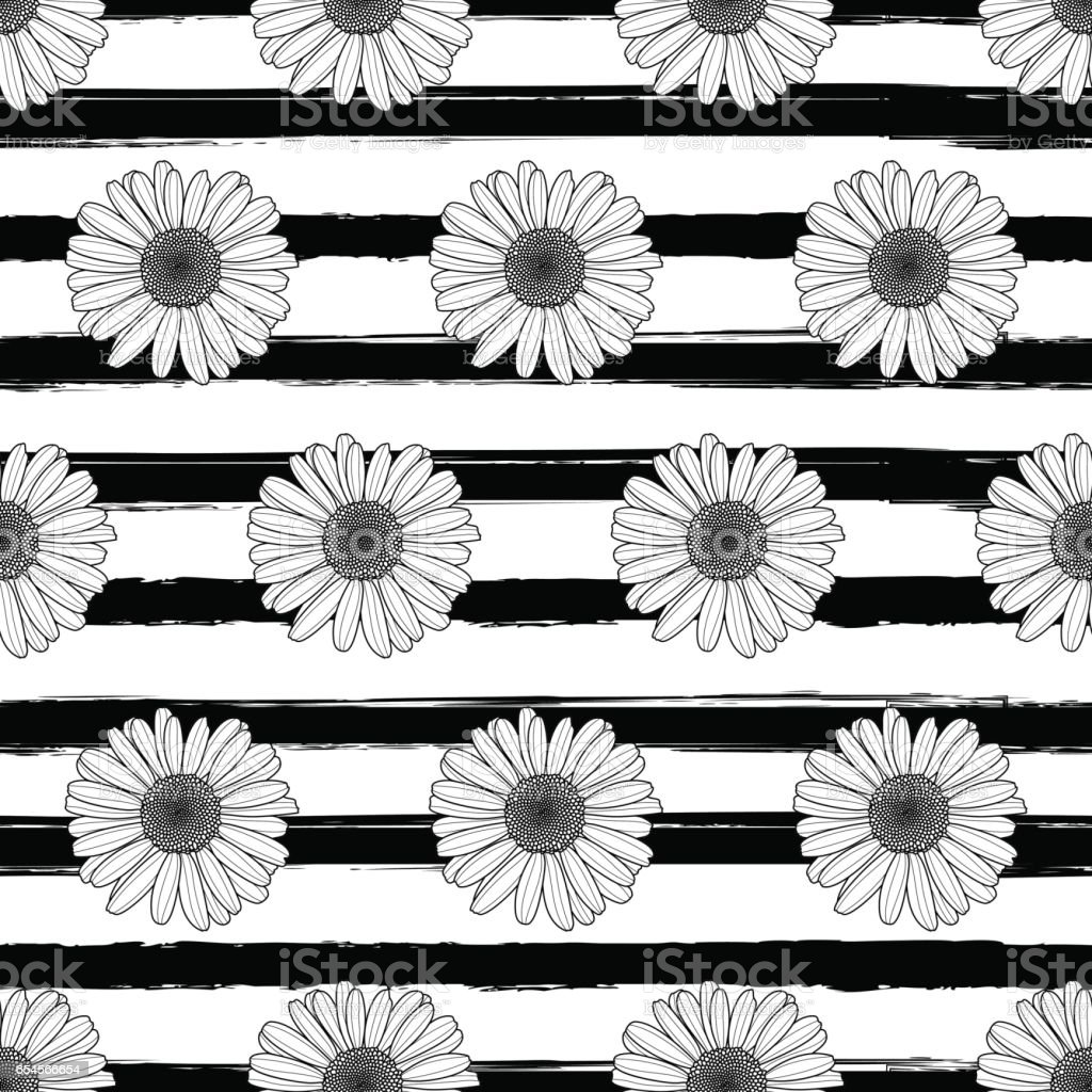 Vector floral seamless striped pattern. Black and white background with outline hand drawn chamomile flowers. vector art illustration