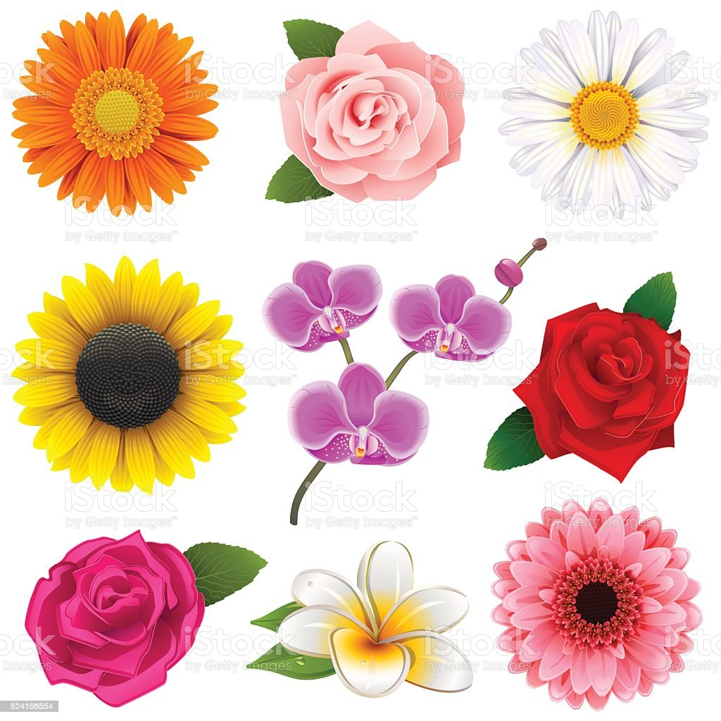 Vector Flower Icons vector art illustration