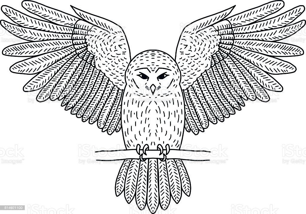 Vector Flying Owl vector art illustration