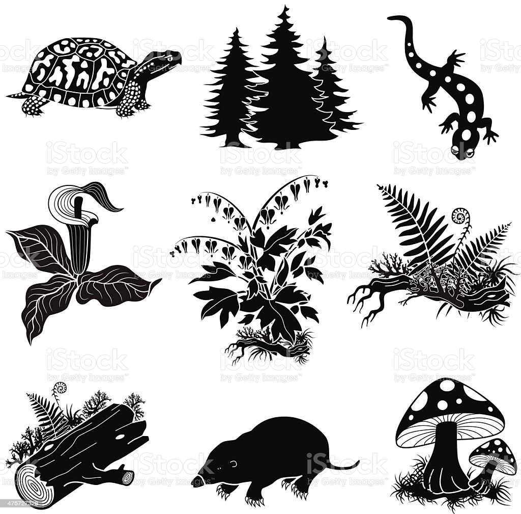vector forest animals, plants in black and white vector art illustration