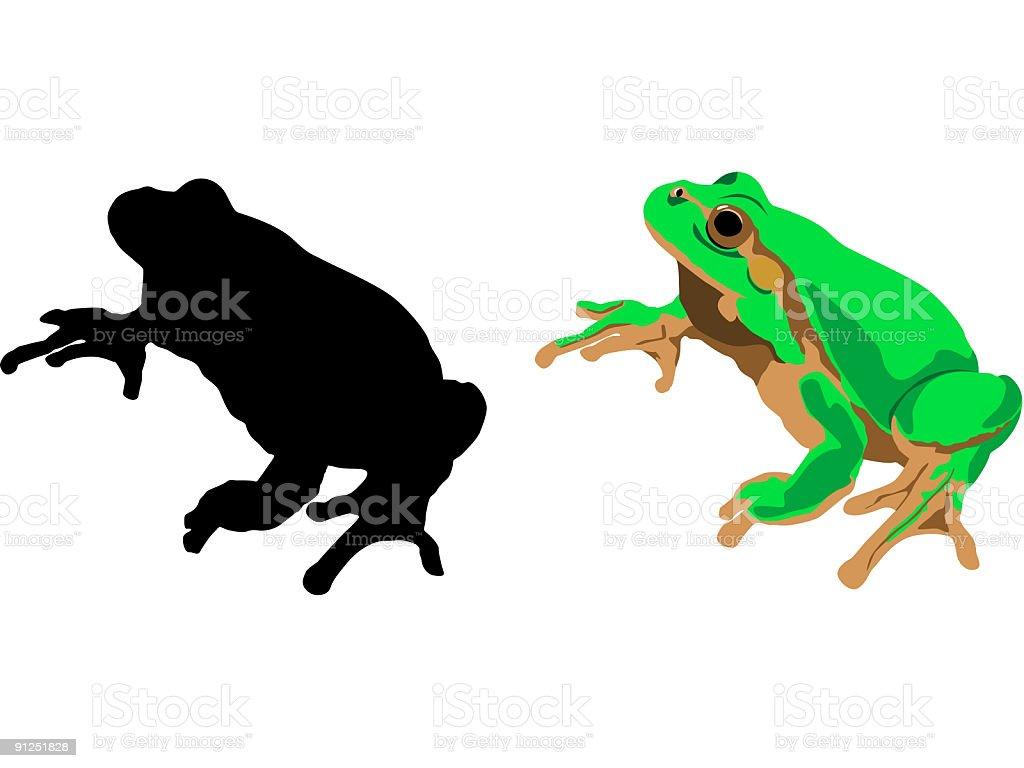 Vector frog royalty-free stock vector art