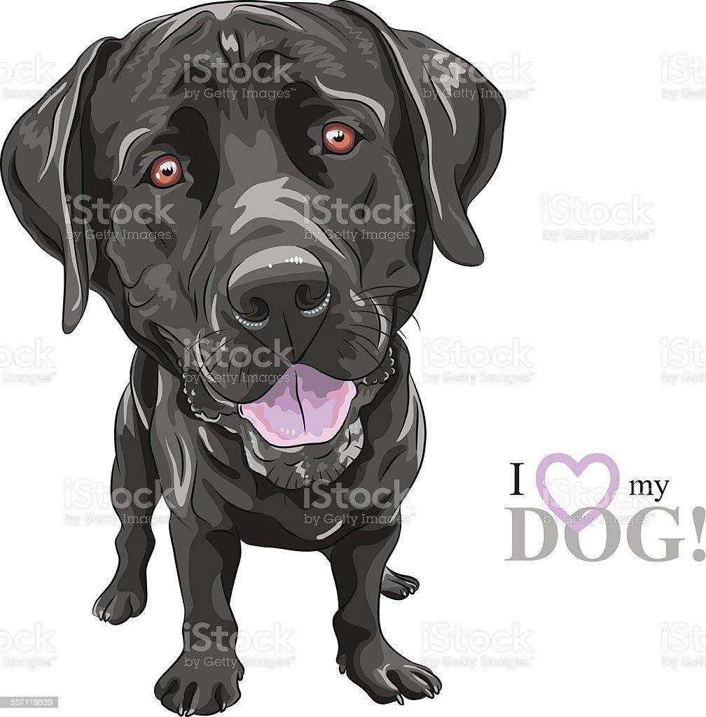 vector funny cartoon black dog breed Labrador Retriever vector art illustration