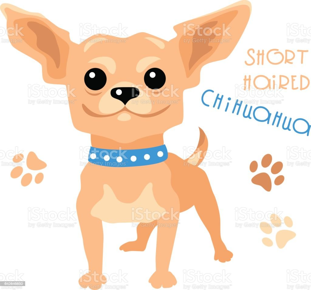 Vector funny shorthaired Chihuahua dog sitting vector art illustration