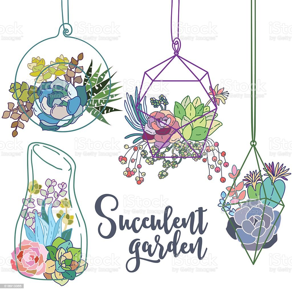 Vector glass terrariums with succulents set vector art illustration