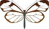 vector Glasswing butterfly Greta oto