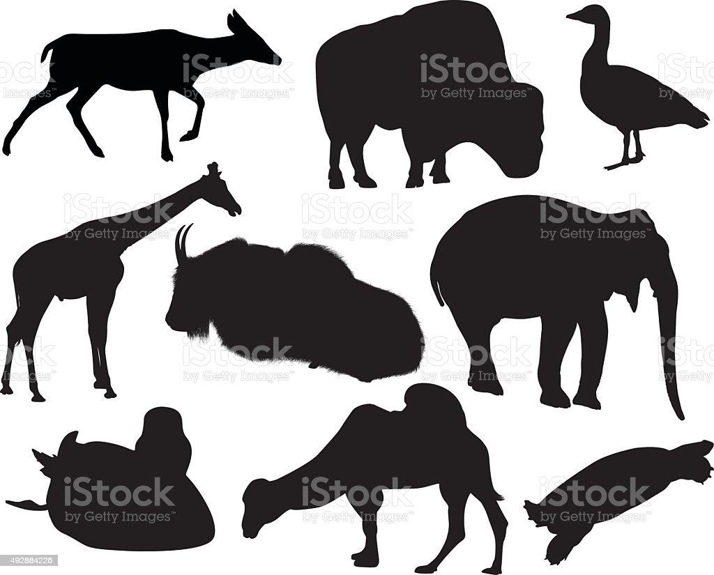 Vector graphics of various animals vector art illustration