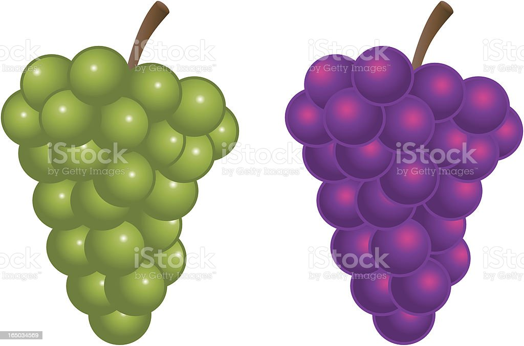 Vector green and purple bunch of grapes royalty-free stock vector art