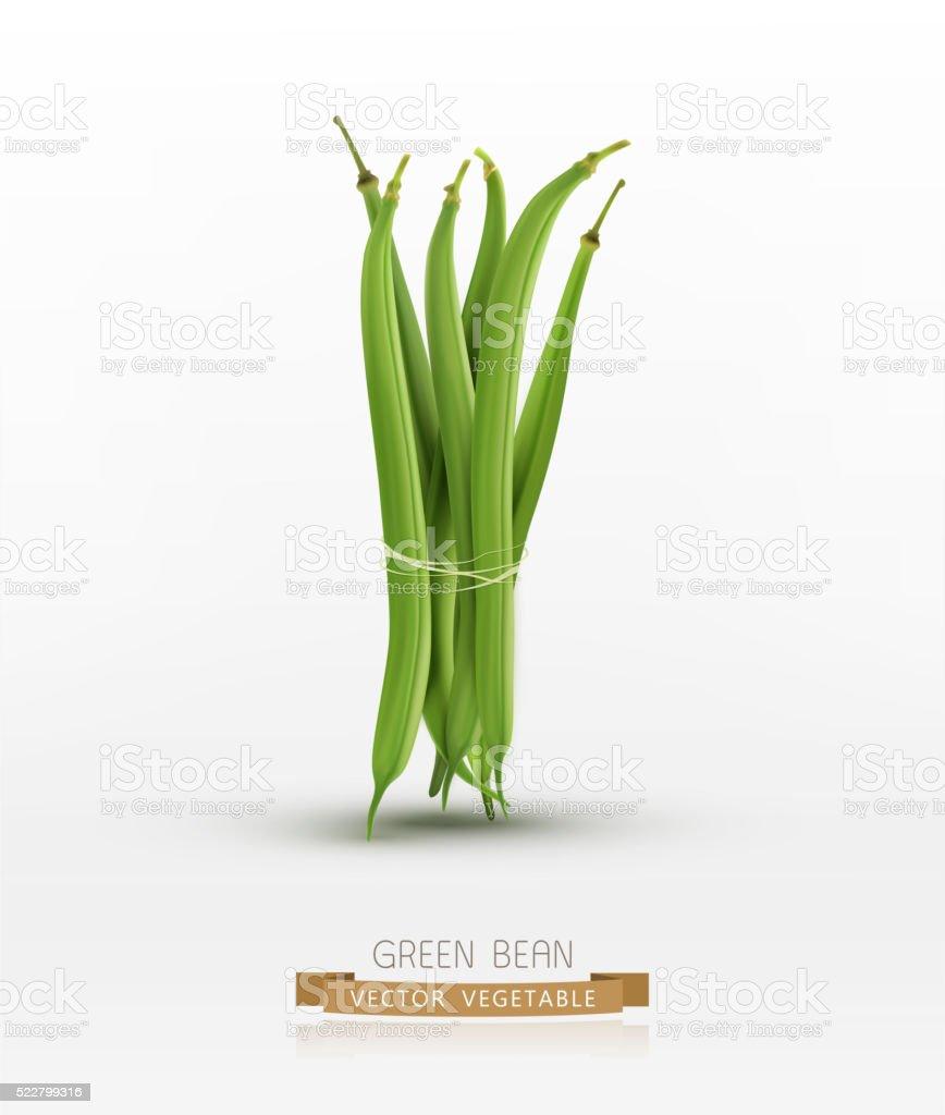 vector green beans bound sheaf isolated on white background vector art illustration