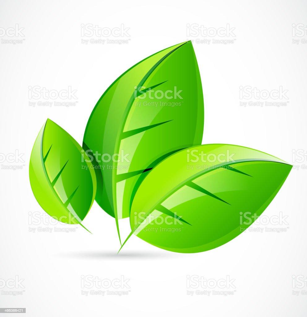 Vector green leaf concept royalty-free stock vector art