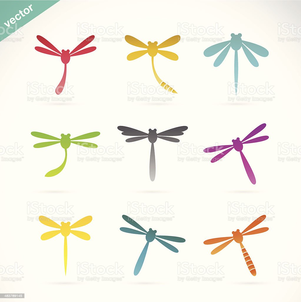 Vector group of colorful dragonfly vector art illustration